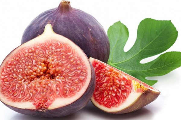 Fig of Iran