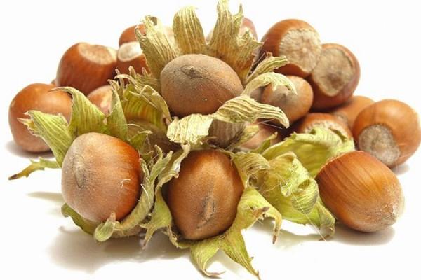 hazelnut of iran for export